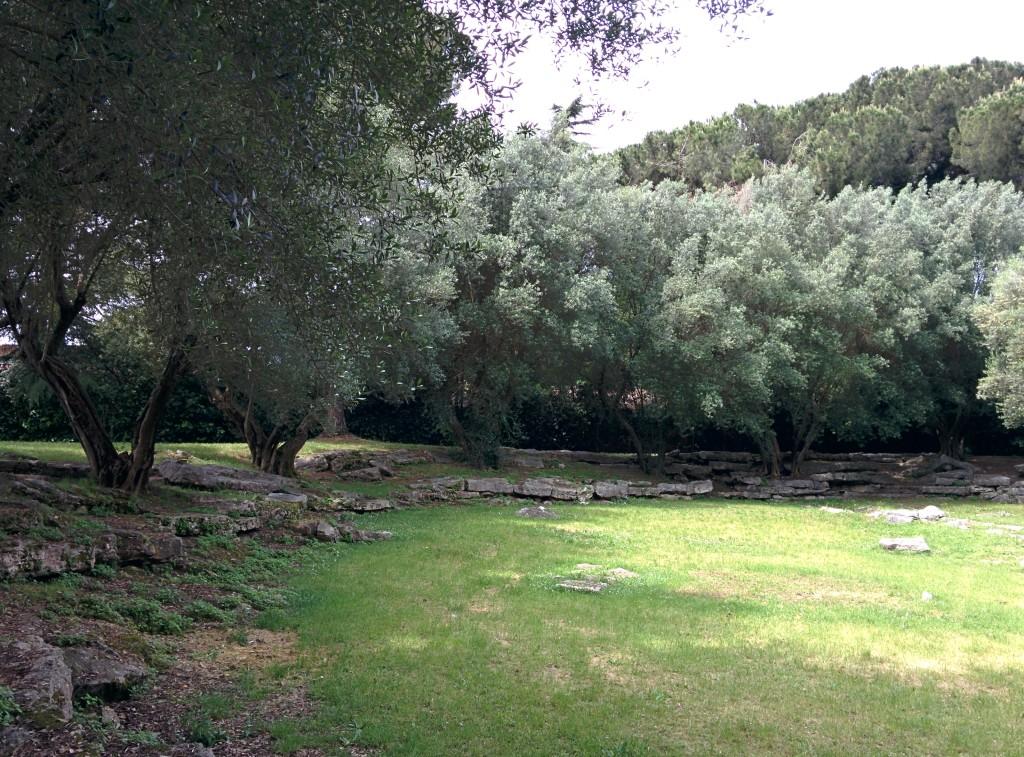 Archidiap giardini dell eur - Giardino con ulivi ...
